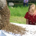 Summ, summ, summ - Bienen auf den Streuobstwiesen